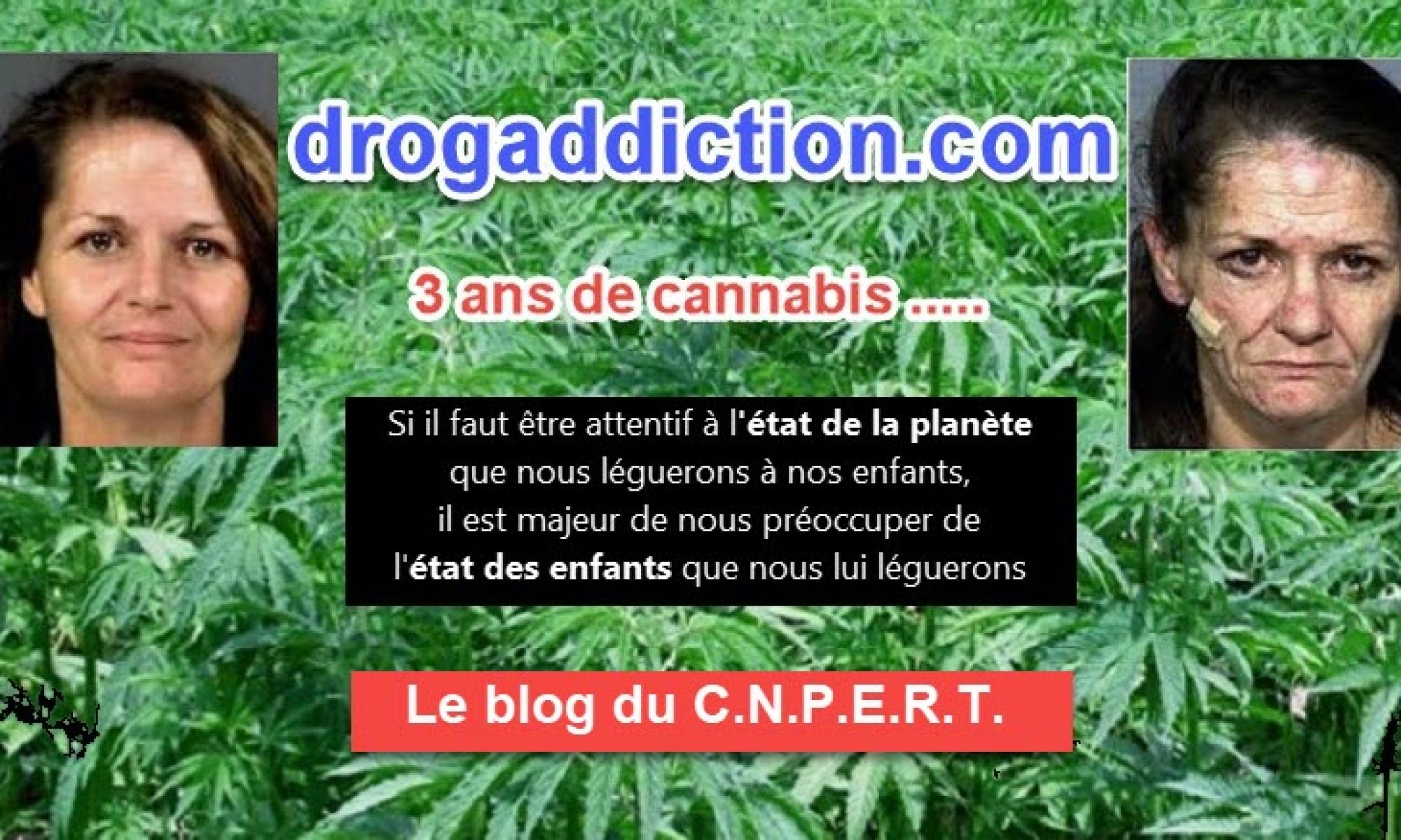 le cannabis est plus pr sent dans le sang des conducteurs morts au volant. Black Bedroom Furniture Sets. Home Design Ideas